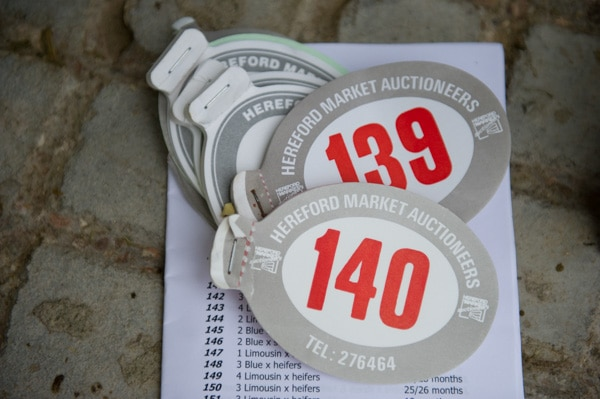 Hereford Livestock Market lot numbers