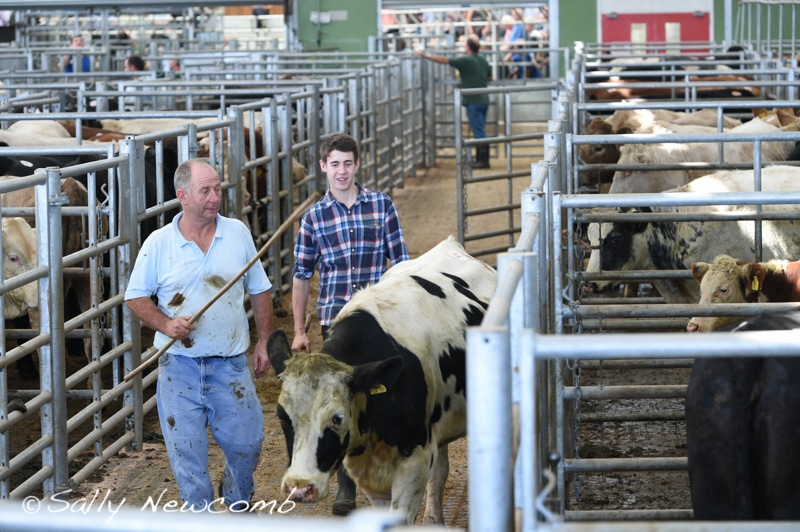 The drovers run a slick operation at Hereford Market