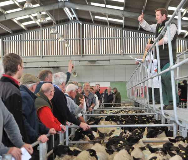 Greg Christopher sells sheep at Hereford Livestock Market