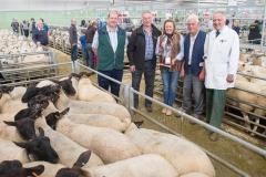 Prize winning sheep at Hereford Livestock Market