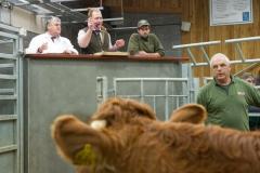 Matthew Nicholls selling cattle at Hereford Livestock Market