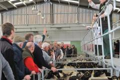 Greg Christopher sells sheep at Hereford Livestock Market