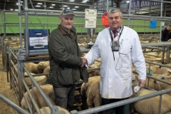 Christmas Fatstock Show of Prime Lambs