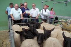 First Show & Sale of Breeding Ewes - 7th August 2018