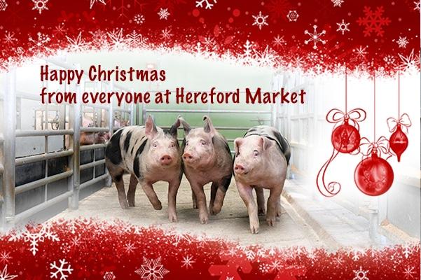 Christmas-pigs