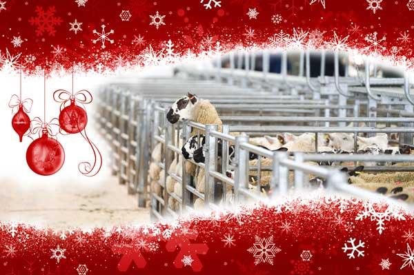 Christmas-sheep